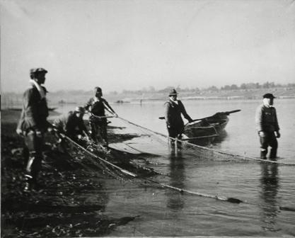 横越鮭の地曳網漁(提供:日本料理本徳)