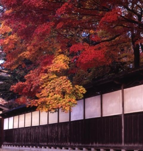 中野邸紅葉