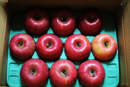 長野リンゴ1