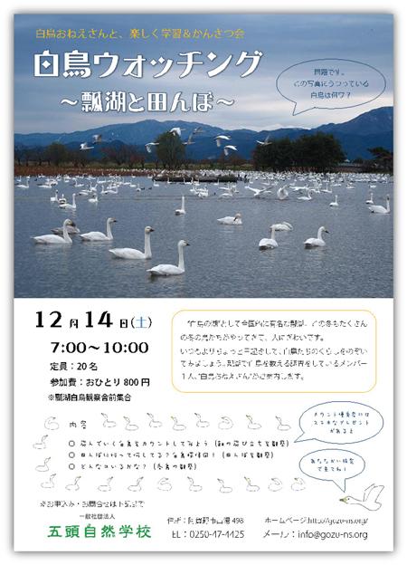 12月14日(土)☆白鳥ウォッチング ~瓢湖と田んぼ~