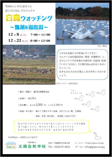 白鳥ウォッチング瓢湖&福島潟