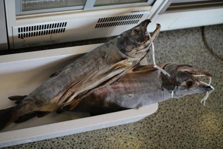 松浜産の塩引き鮭