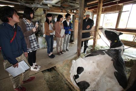 神田酪農牛舎見学