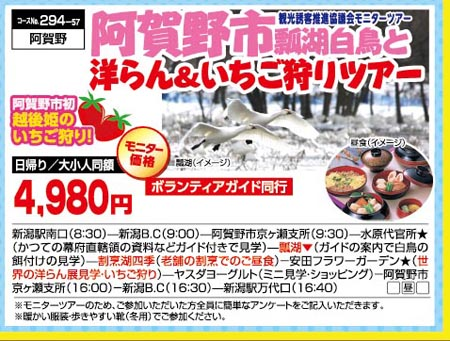阿賀野市瓢湖白鳥と洋ラン&いちご狩りツアー