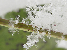 【五頭自然学校】2月8日(土)/科学チャレンジ!~雪をつかってアイスをつくる~画像1
