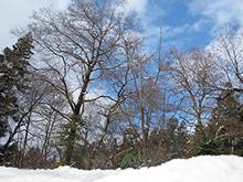 【五頭自然学校】2月8日(土)/科学チャレンジ!~雪をつかってアイスをつくる~画像2