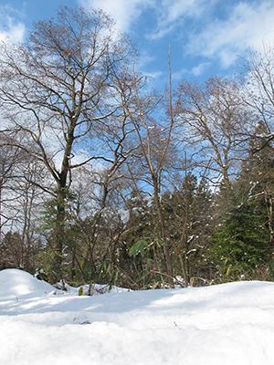 【五頭自然学校】2月11日(火祝)/【特別企画】五頭かんじきハイキング画像1