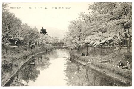 新江の桜(明治から大正期の絵葉書)柏崎市立図書館所蔵小竹コレクションより引用