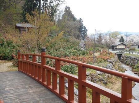 2014.4.21現在の麒麟山いこいの森公園雪椿の様子3