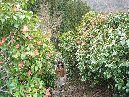 角神雪椿園
