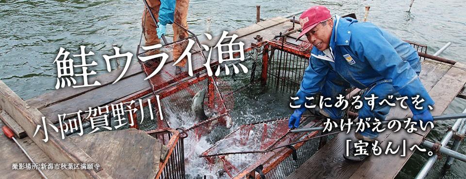 2017.12.25トップ画像(鮭)