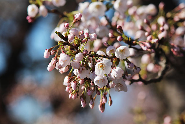 2017.4.13繝輔y繝ュ繧ッ繧呎眠豎溘・譯懶シ亥・蛻・調縺搾シ・IMG_3398