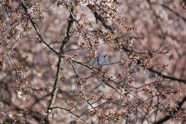 2017.4.13繝輔y繝ュ繧ッ繧呎眠豎溘・譯懶シ亥・蛻・調縺搾シ・IMG_3331