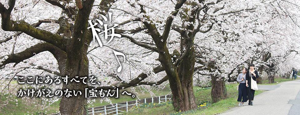 2018.4.5トップ画像4(桜)