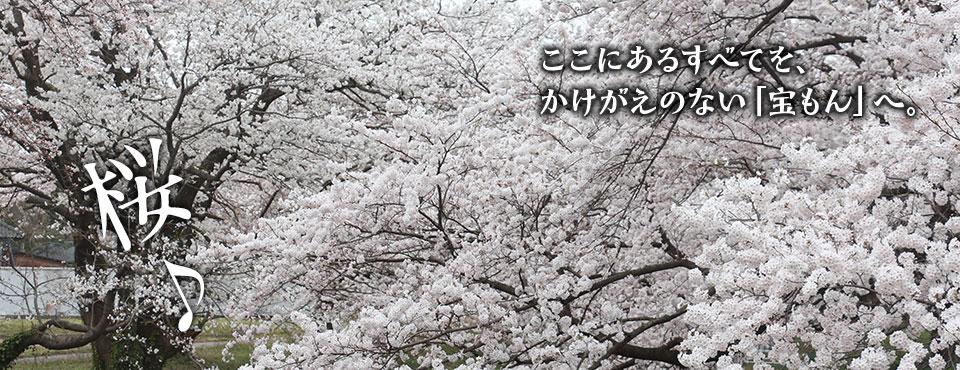 2018.4.5トップ画像2(桜)