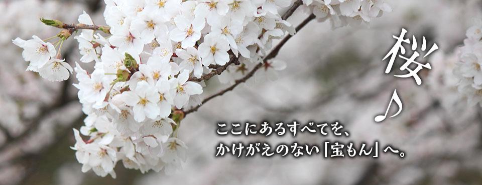 2018.4.5トップ画像3(桜)
