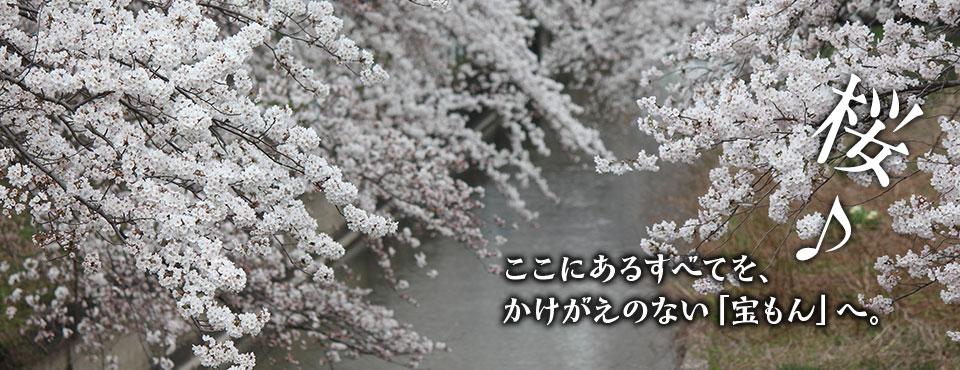 2018.4.5トップ画像(桜)
